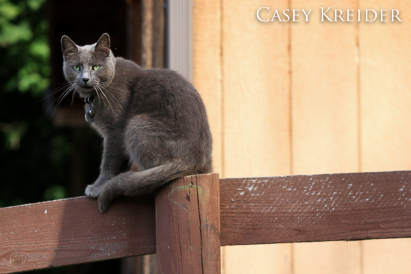 Extra-friendly barn cat at an assignment yesterday in Mount Hope, Pa.