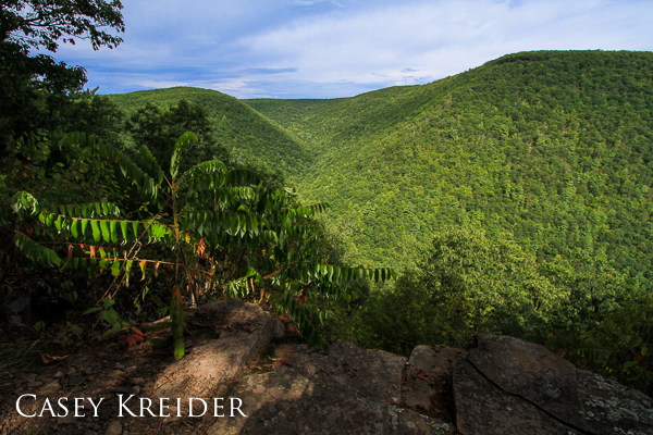 View east from a rock ledge above Wolf Run  on the Golden Eagle Trail in Wolf Run Wild Area, Lycoming County.