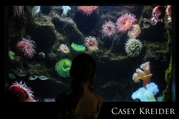 A young girl studies a tank of sea urchins at the National Aquarium in Baltimore.