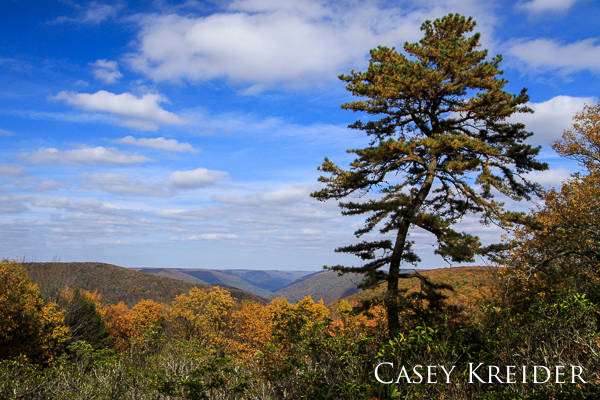 Northeast view over the Pine Creek Gorge from Big Trail Scenic Road in Lycoming County.