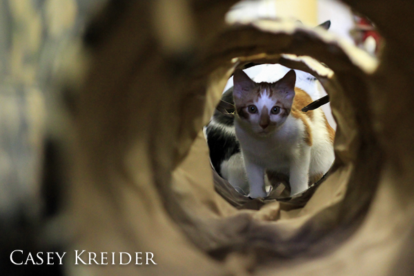 Light hits a kitten's face through a cat tunnel at Furever Home Adoption Center