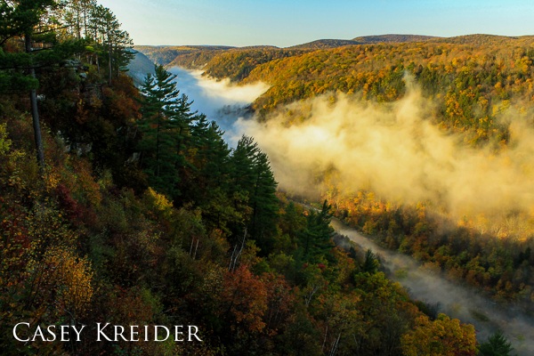 Morning fog lingers in the Pine Creek Gorge at Leonard Harrison State Park in Tioga County.