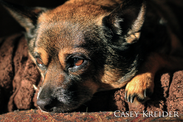 Chico dozes in the winter sunlight.