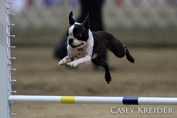 akc dog agility blog 2