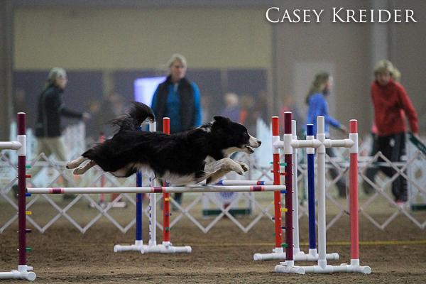 akc dog agility blog 6