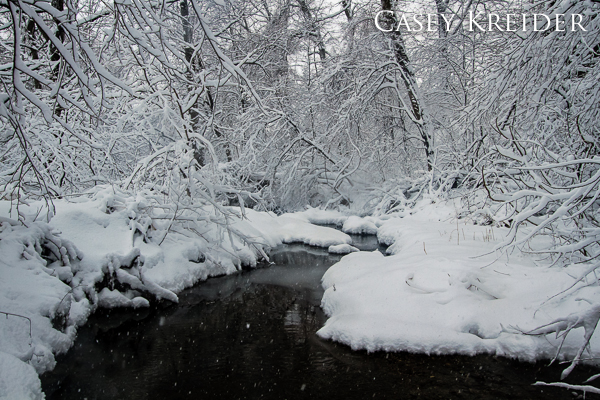 Snow clings to the branches and banks along Santo Domingo Creek in Warwick Township Linear Park.