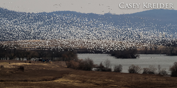 Thousands of snow geese take flight over a group of birdwatchers and photographers at Middle Creek Wildlife Management Area's Willow Point.