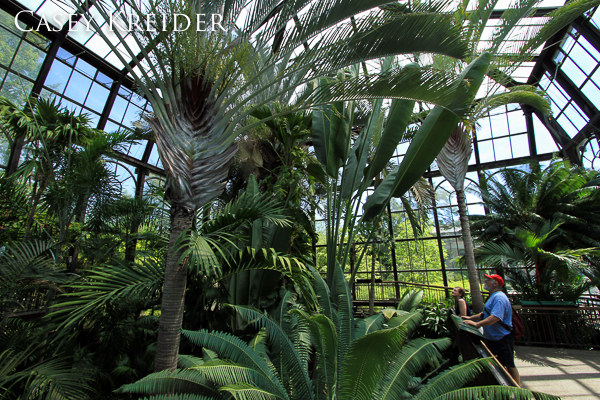 Inside the Palm House at Longwood Gardens in Kennett Square