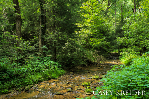 Barnes Run trickles through old growth forest at Ferncliff Wildflower and Wildlife Preserve, a National Natural Landmark.