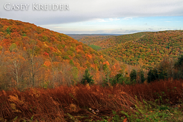 Fall foliage at Elk Run Vista in Tioga State Forest Oct. 15, 2011.