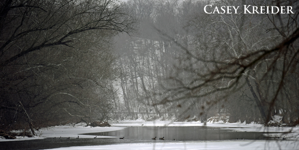 Ducks and Canada geese swim down an unfrozen section of the Conestoga River in Lancaster County Central Park.