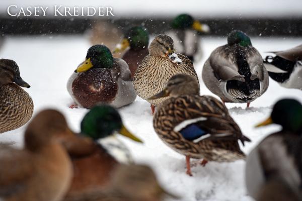snowstorm blog 12