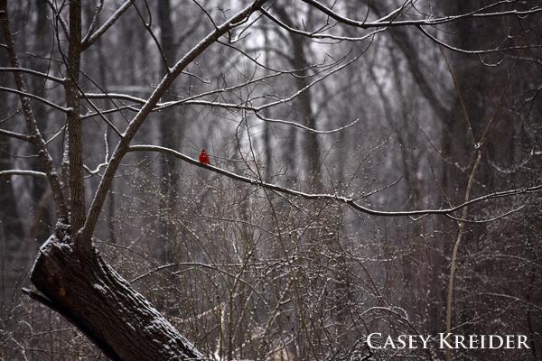 spring snow blog 1