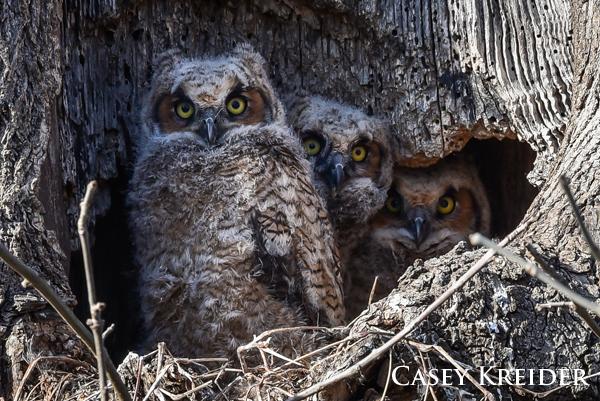 owl blog 2