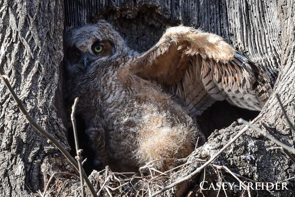 owl blog 3