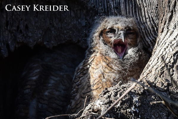 owl blog 6